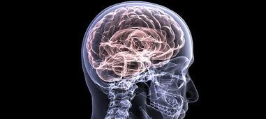 小脑只负责协调动作 不对,小脑还和创造性相关呢