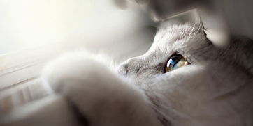 猫咪的肚子一直故涌