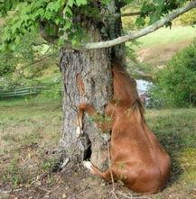 恐怖 怪树无所不食 活吞成年马