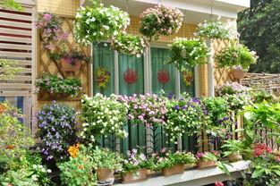 阳台下面有墙上面有栏杆怎么养花