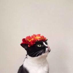 家里养花和猫