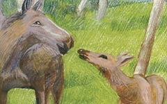 西顿动物故事读后感600字