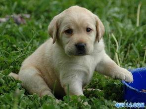 嗯 是这样的,我想养条狗,金毛,因为是第一次,所以有很多东西不知道,包括注意事项,都要买什么东西,