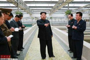 港媒称朝鲜动员国民赚外快 小学生要交两幅兔皮
