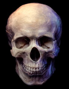 ...OU特朗普家的骷髅-KULOU