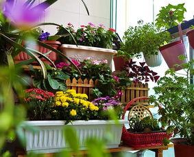 阳台养花土为什么硬
