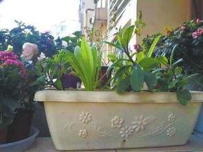 花园里如何协调养花和种菜