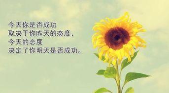积极正能量的句子诗句