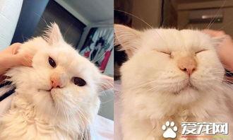 猫咪吸自己的咪咪