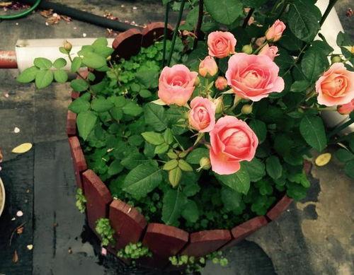 养花种植深度
