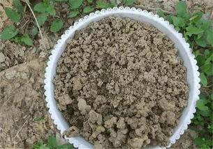 土里有蚂蚁蚯蚓可以养花吗