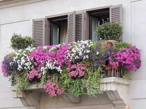 阳台养花开花的