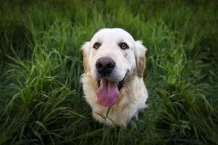 关于狗的短句说说大全