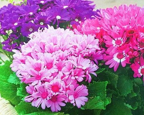 家里养花开得好