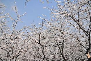 三月北方养花
