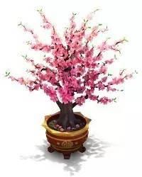 盆栽什么有桃花运