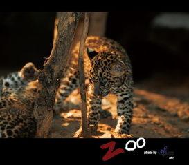bbwin摄影作品 动物园的故事