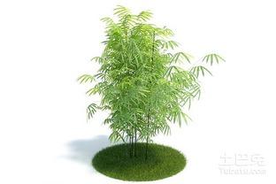 竹子养在店里风水禁忌