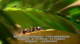关于昆虫有关的诗句