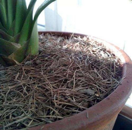养花的土应该松还是实
