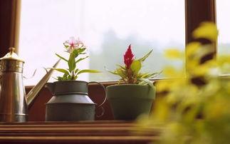 家庭养花及摆放