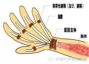 摇一摇 抢红包,拇指关节疼痛是怎么回事