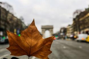 三角梅冬天落叶怎么办