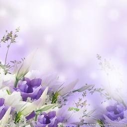 紫色小清新背景图片