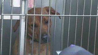 美国女童遭两恶犬撕咬致残狗主被判赔7200万美元