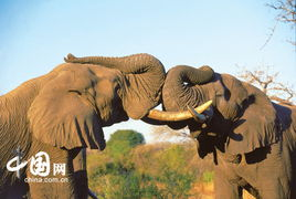 史上最牛的摄影作品 南非动物大赏