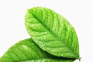 生命的绿叶心理测试
