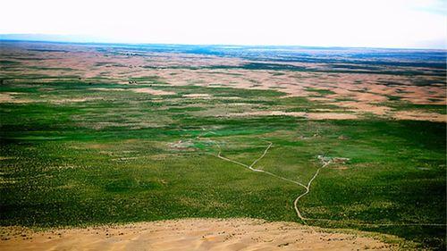 全国知名的库布其沙漠,到底发明了什么样的种树技术  红柳高清图片