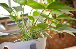 碳渣养花方法