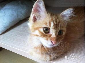 猫咪身上有虫的表现