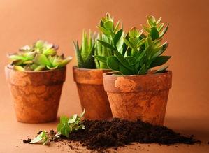 怎么自制养花的肥料水