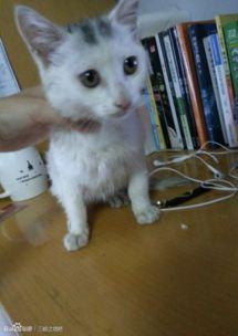 重庆有没有领养猫咪的