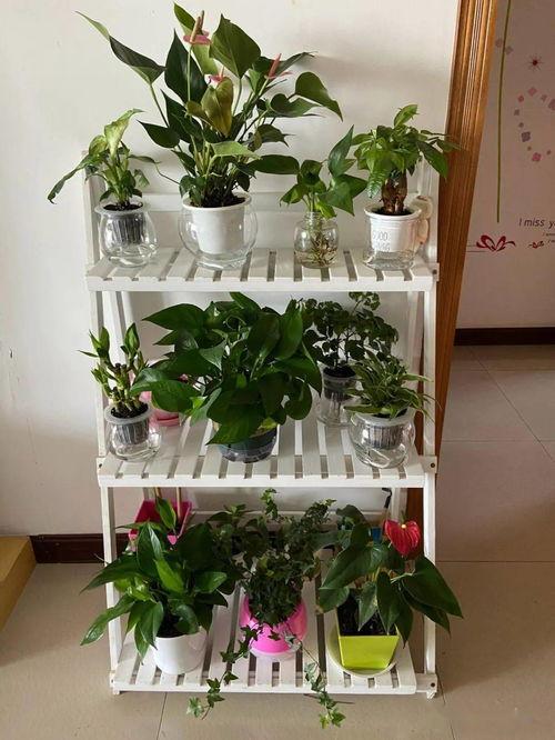 客厅养花养植物好吗
