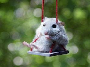 突破性别枷锁 世界首只双父来源小鼠在中国诞生
