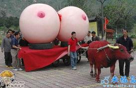 这尼玛传说中的牛奶节