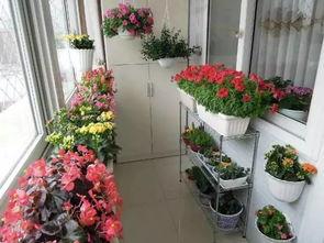 形容养花的美好心情