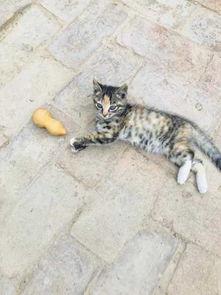 猫的五行属什么名字
