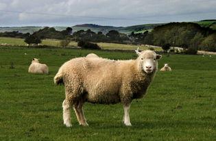 5岁属羊的运程