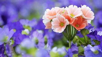 自己越来越喜欢养花的说说