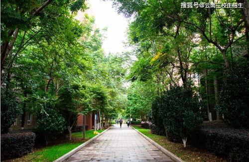 531能考云南哪些大學