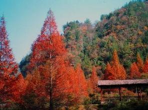 大风堡原始森林