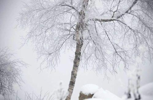 描写冬天写景的诗句古诗大全