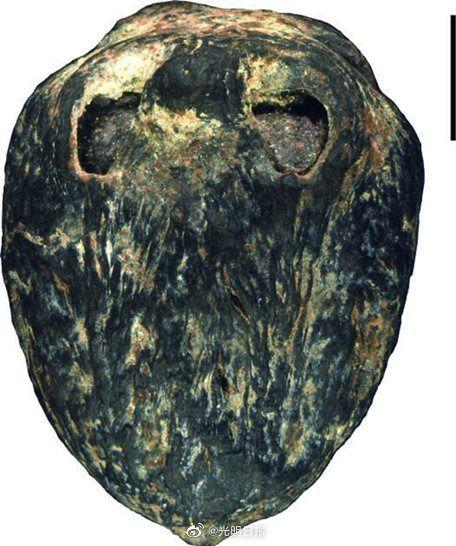"""1500万年前的""""木乃伊""""南酸枣化石。("""