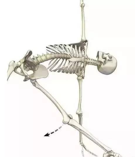 矫正膝超伸的瑜伽体式
