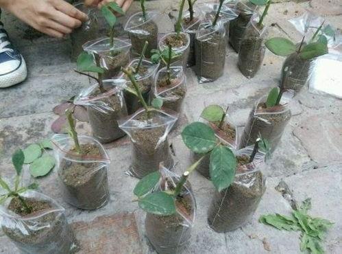 代替土壤养花