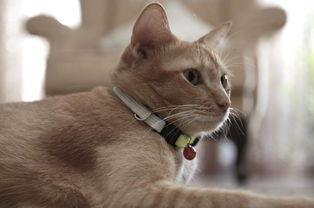 猫咪的便便颜色跟猫粮颜色有关吗